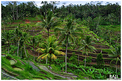 Bali by Omegaforest (from flickr)